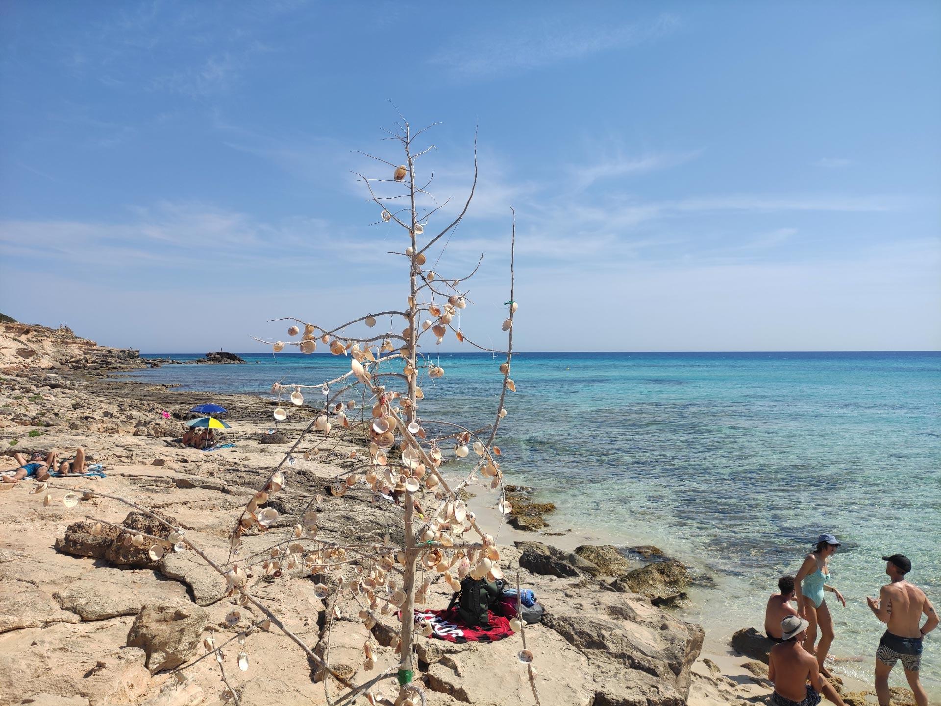Albero con conchiglie sulla spiaggia di Es Cupinà